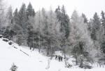 1 V belem gozdu